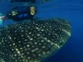 Amanzi_Mag_Sylvia_Earle_with_whale_sharks_Courtesy_of_Hope_Spots_Company_Inc