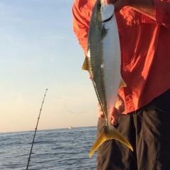 Yellowtail Fishing Cape Point 2014