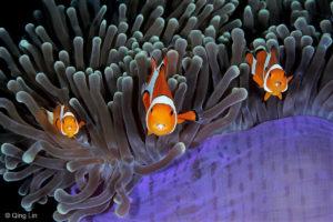 wildlife underwater photographer