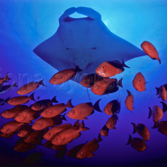5 considerations for a truly great underwater photograph