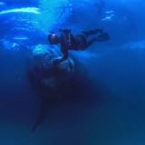 Dive like a Whale