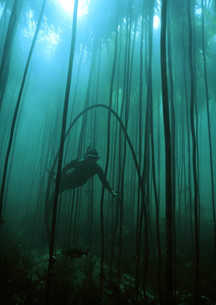 kelp forest and snorkeller image © Geoff Spiby