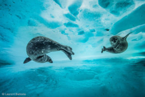 wildlife underwater photographer