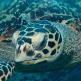 A true story about Turtles – Georgina Jones