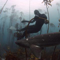 Free Diving – A Breathtaking Love Affair